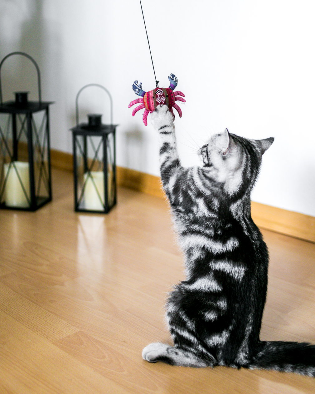 Katzenspass Spielangel
