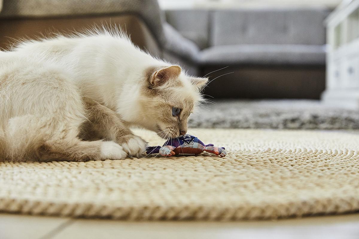 Katzenspass Spielzeug