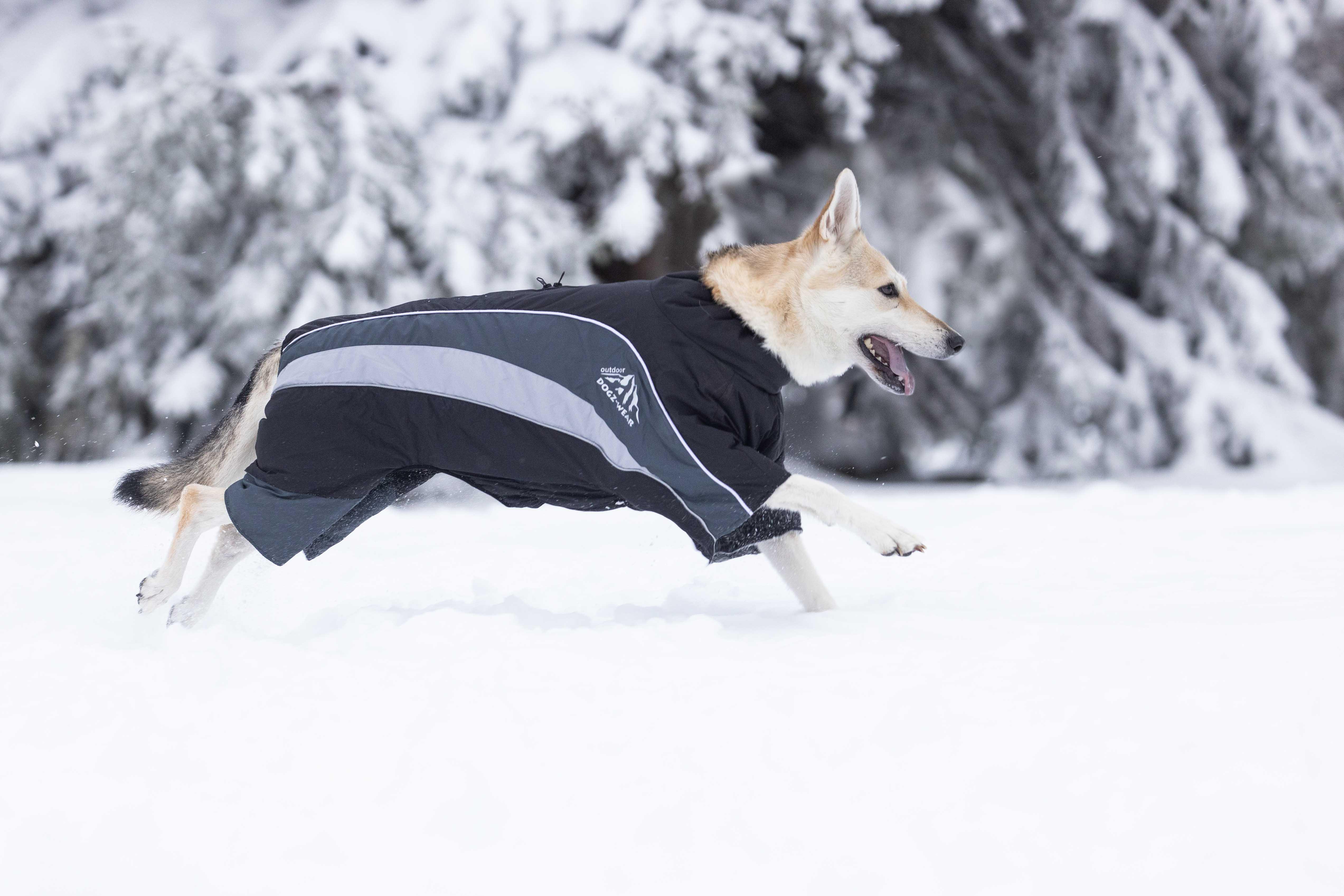 Skianzug Dogz-Wear