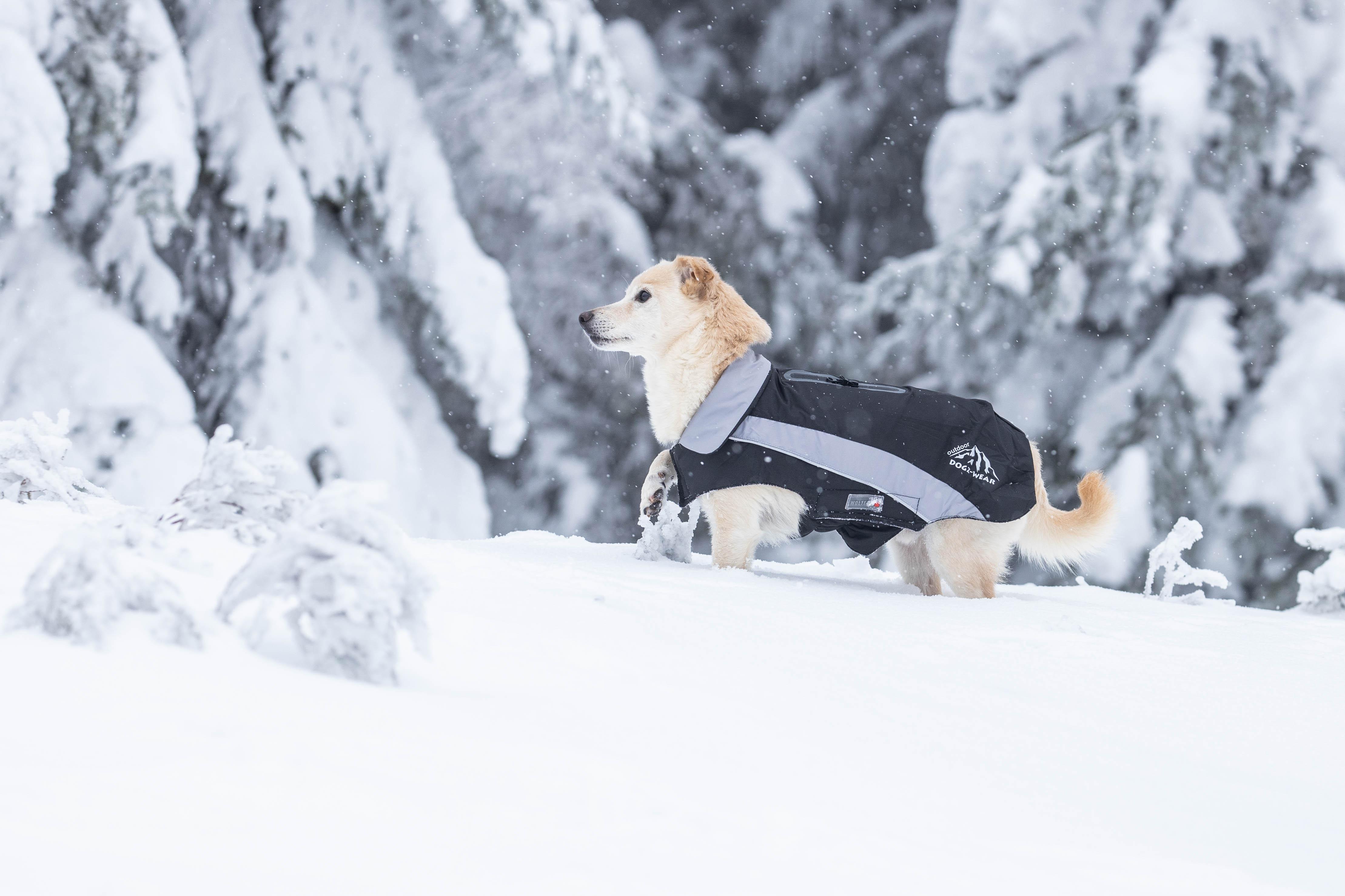 Skijacke Dogz-Wear