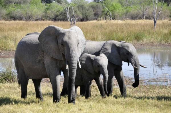WWF Patenschaft zum Schutz afrikanischer Elefanten